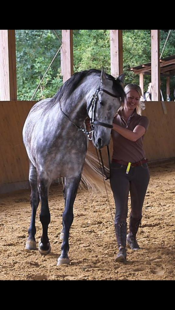 Lerne mit und von Deinem Pferd, Horsemanship im Alltag, Reiten in Balance, pferdegestütztes Coaching, Workshop für Reiter und Pferd auf dem Seminarhof Feuerborn, nördlich von Bremen.